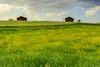 Boyabat (Senol Demir) Tags: boyabat sinop field flora landscape ngc concordians turkey türkiye wooden house