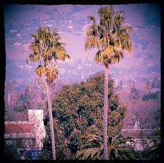 Two Palms (earthdog) Tags: tree d50 landscape nikon sanjose nikond50 palm palmtree 2012 afsdxvrzoomnikkor55200mmf456gifed