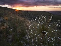 Sunset at Bocaina Hills (Fabio Rage) Tags: serra da bocaina cerrado sempre viva por do sol araxa horizonte perdido fabio rage