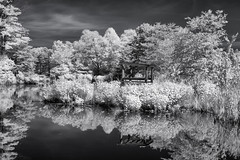reflections in IR (kenjiedwards) Tags: trees blackandwhite ir pond infrared