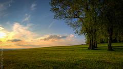 Attersee sterreich/Austria (Wieland77) Tags: sunset tree landscape austria sterreich nikon sonnenuntergang laub himmel 1020mm 169 landschaft bume attersee nikonlove nikonsigma nikonlandscape nikond7200