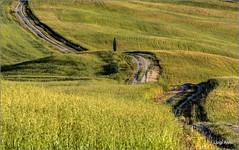sulle colline della Val d'Orcia (Luigi Alesi) Tags: road italy nature way landscape countryside nikon scenery san italia raw country natura unesco hills campagna val tuscany siena toscana tamron sentiero paesaggio scenics colline dorcia 70300 patrimonio quirico dellumanit d7100