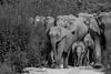Full Family (Said Photography) Tags: dhikala jimcorbett elephants may2016 forest nationalpark india asiaticelephants