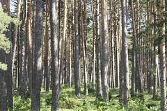 Woods (Macarena Lpez) Tags: woods espinar segovia castillayleon green nature outdoors