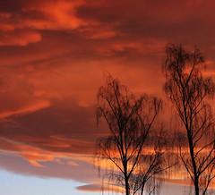 Calm morning..... (flying-leap) Tags: trees newzealand nature sunrise dawn silhouettes nz 4winter the4seasons northcanterbury canon60d cloudsstormssunsetsunrises tamonaf16300mm