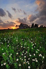 Country Sunset (VonShawn) Tags: flowers sunset ohio clouds landscape medinacounty medinacountyparkdistrict chippewainlettrail