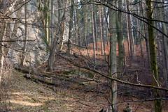 The foot of the rocks (Hejma (+/- 4500 faves and 1,5milion views)) Tags: wood leaves limestone gorge chiaroscuro tress monadnocks crampedrocks paternitynationalpark