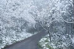 TaipeiSnow day (Iyhon Chiu) Tags: road winter snow cold snowy path taiwan taipei       xindian  2016  sindian    newtaipeicity