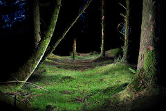 Davidstow Woods PWL, Cornwall, UK (jules:g) Tags: uk tree night dark painting woods cornwall forrest torch lichen davidstow crowdy mosslight