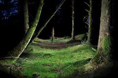 Davidstow Woods PWL, Cornwall, UK (jules:g) Tags: uk tree night dark painting woods cornwall forrest torch lichen davidstow crowdy mosslight