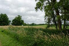(joeldinda) Tags: road sky cloud house tree nikon michigan july v2 tallgrass roxana paved 1365 2016 farmyard eatoncounty 3162 1v2 roxandtownship nikon1v2