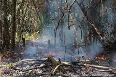Milpa Farming Belize (Hickatee) Tags: forest rainforest maya chocolate belize wildlife farming culture toledo jungle puntagorda milpa hickatee hickateecottages cacaofest hickateebelize hickateepuntagorda