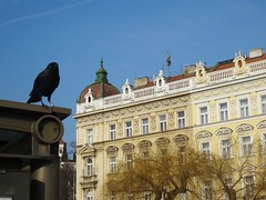 Streets of Prague (bernarou) Tags: building bird classic nature architecture europa europe republic czech prague central praha praga raven bohemia repblica checa republika czechia praze esk