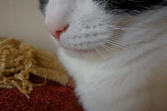 Cats Nose (Lydie's) Tags: macro cat fur nose whiskers