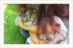 Goodbye (pickled_newt) Tags: family pet cat straycat minky mydeadcat deathofapet