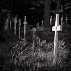 Good Hart 02 (Joe Iannandrea) Tags: blackandwhite cemetery grave michigan ishootfilm hasselblad analogphotography ilfordfp4 filmphotography goodhart 503cx pmkpyro woodencrosses epsonv500 carlzeisssonnart150mf4 photostock2016