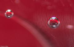 Floating (Wayne Stiller) Tags: macro reflections floating bubbles foam sparklingwater macromondays