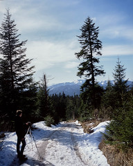 Tegernsee129.jpg (greendarkroom) Tags: wood trees winter sky mountain snow film analog mediumformat photography outdoor hiking tripod pflanze slidefilm 6x7 baum tegernsee fichte mamiya7 shootfilm pinie konifere