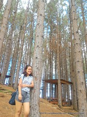 Woman-In-Digital-Dahilayan-Forest-Park-Bukidnon-016 (livingMarjorney) Tags: travels touristspot mindanao bukidnon dahilayanforestpark livingmarjorney womanindigital