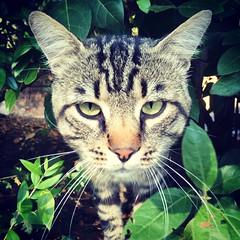 My new friend (karine_avec_1_k) Tags: camping summer cat friend chat italia ami t italie campsite