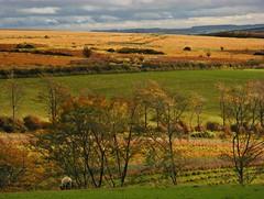 Pastures in Paradise (Dazzygidds) Tags: clouds sheep beautifullight somerset textures pasture exmoor westsomerset exmoornationalpark gorgeouslight sunlittrees britishnationalpark texturesoftheland alovelylightcoating