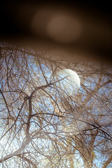entangled (Ryan Policky) Tags: refractions barnum throughthewindow entangled 2013 treeofdeath ryanpolicky