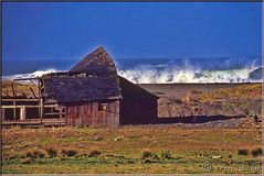 That Windbown Look (Romair) Tags: ocean barn surf waves windy stormy seashore dilapidated windblown oldbarn sonomacoast marincoast rogerjohnson