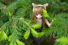 squirrel Chiika /   (Tiinyan) Tags: squirrel doll azone pureneemo chiika excute risusan