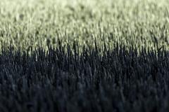 Weizen (diwan) Tags: shadow nature field canon germany geotagged deutschland eos bokeh wheat natur grain feld schatten getreide weizen saxonyanhalt sachsenanhalt 2013 canoneos650d osterweddingen geo:lon=11603284 geo:lat=52057809