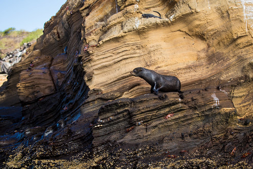 Fur Seal and Friends