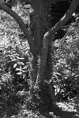 7677 (Denis Streibig) Tags: noiretblanc nineinchnails lille arbre becher jardindesplantes cdre objectivit denisstreibig