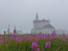 Coastal Fog (anng48) Tags: canada church fog quebec qc eglise brume epilobium chamerionangustifolium cotenord epilobe riviereautonnere onagracieae greatwillowleaf