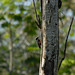 """Yellow-tufted Woodpecker • <a style=""""font-size:0.8em;"""" href=""""http://www.flickr.com/photos/101688182@N03/9772021546/"""" target=""""_blank"""">View on Flickr</a>"""