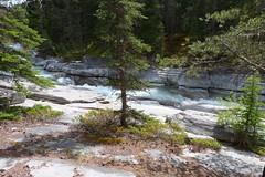 P1090562 (philrickerby) Tags: canada alberta jaspernationalpark canadianrockies malignecanyon maligneriver