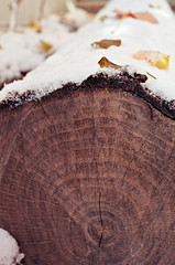 Transition (-kenza) Tags: wood autumn winter brown white snow cold tree nature leaves leaf branch stump trunk