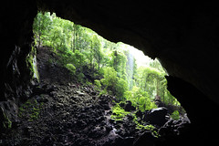 Deer Cave - Garden of Eden (gidovd) Tags: trees light sunlight tree green nature rock canon underground geotagged rocks asia may unesco worldheritagesite caves sarawak malaysia borneo limestone cave caverns cavern worldheritage mulu gunungmulu 2013 deercave {vision}:{mountain}=062 {vision}:{outdoor}=0983 {vision}:{plant}=0859