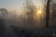 Fra fronde il sol nascente (_milo_) Tags: italy sun sunrise canon eos soleil italia alba sole angera 18135 60d