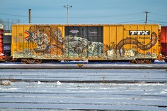 FIVE (TheLost&Found) Tags: winter snow art nature beautiful car minnesota animal train graffiti monkey amazing midwest gorilla box five minneapolis whole boxcar graff primate mn freight tbox ttx wholecar e2e