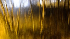 Railside (wetbicycleclappersoup) Tags: icm intentionalcameramovement