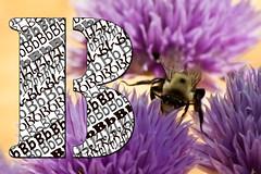 Busy Bee (Doug.Mall) Tags: b macro bee busy font letter macromondays busyb dougmall nikond5100