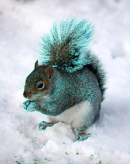 #CrazyCamera glowing squirrel