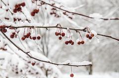 Snow-7931