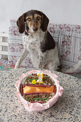 Fiona And Her Cake (Daniele Nicolucci photography) Tags: birthday portrait dog pet cute beagle cake puppy mix pretty adorable posed 1yearold fiona pup lovely 1year bigears oneyear doggie growingup oneyearold kurzhaar puppeh