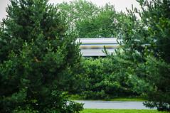 Silver Bullet (Ian David Blüm) Tags: longexposure railroad train path montreal rail via evergreen passenger spruce
