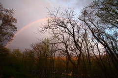 After Early Evening Shower (wmliu) Tags: trees usa us newjersey rainbow nj chatham wmliu