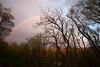 After Early Evening Shower (wmliu) Tags: trees usa us newjersey rainbow nj chatham wmliu