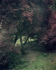 park (Anders Hviid) Tags: plaubel makina