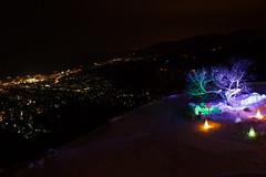 Illuminated alone 2015 / 雪あかり 一本桜 (yanoks48) Tags: snow japan night hokkaido 北海道 日本 otaru 夜景 雪 夜 小樽 小樽雪あかりの路 otarusnowlightpath