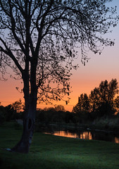 Tree at Digby Bridge (burgootim) Tags: bridge ireland sunset tree digby kildare