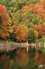 Laguna arcoiris (bastian.gygli) Tags: chile lake fall colors arcoiris landscape rainbow lagoon otoo laguna reflejos conguillio